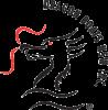 Dragon boat NSW Logo
